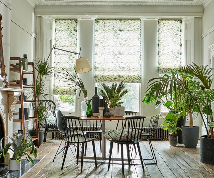Dining room with indoor plants
