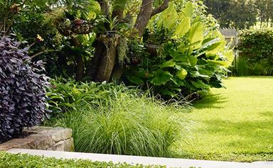 Summer lawn care: how to keep your lawn alive in heat and drought