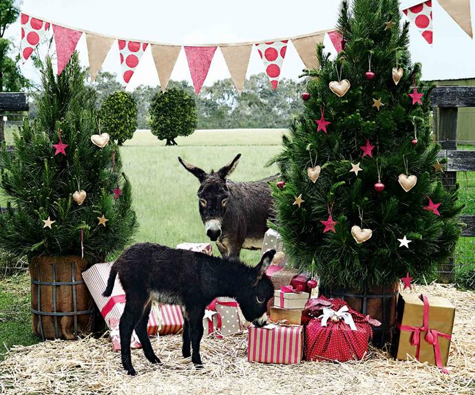 Two Christmas trees and two donkeys