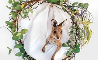 Baby kangaroo joey in a sling with a Christmas wreath