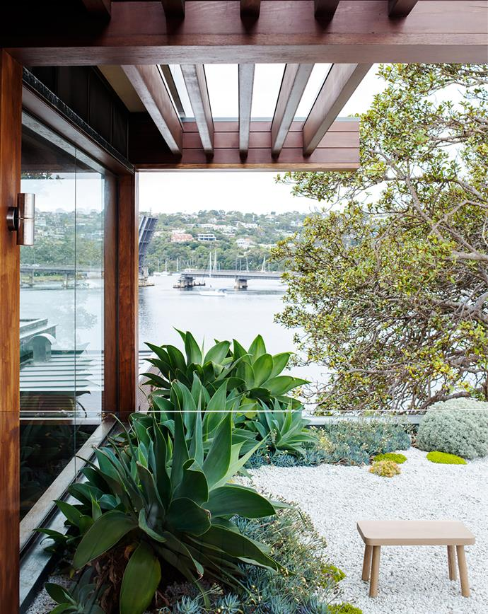One of the Port Jackson figs helps to create privacy in the little landscaped area off the study on the top level. Garden design by Mandara Landscapes and Spirit Level.