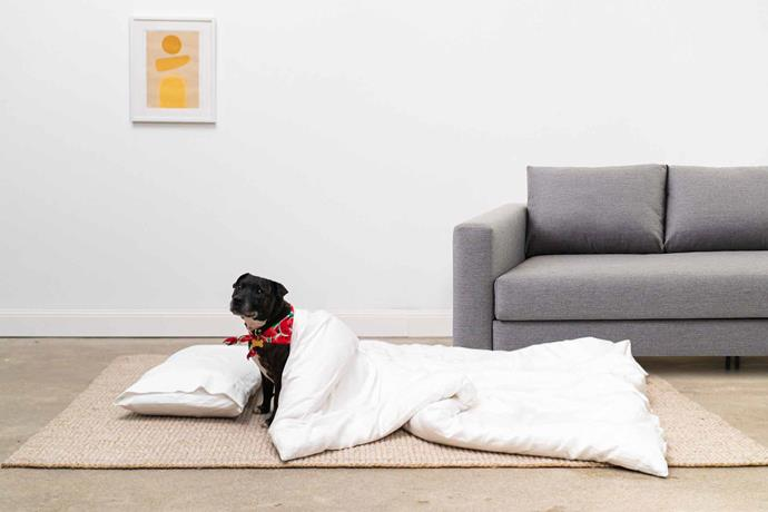 """The doghouse bundle (3-seater sofa, pillow and flatsheet), $1440 (originally $1590), [Koala](https://bit.ly/2pPWXRU