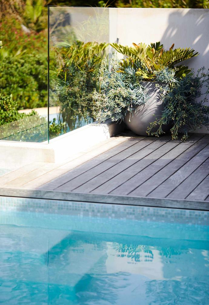 Water splashes don't affect the resilient plants by the pool.