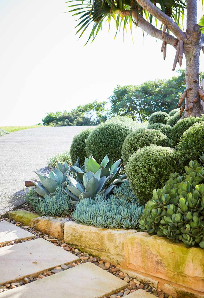 A hardy mix of succulents thrive in this lush garden.