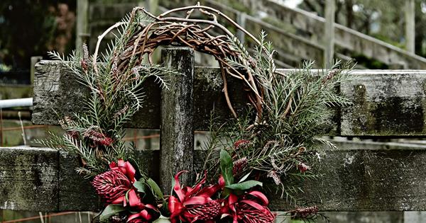 Festive Australian Native Plants For Christmas Homes To Love