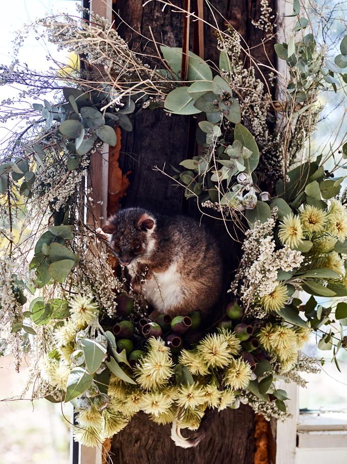 "'Ms Possum', pictured here in a eucalyptus wreath, ""appeared one day and has been very friendly. We are trying to leave her be as much as possible,"" says Bridget."