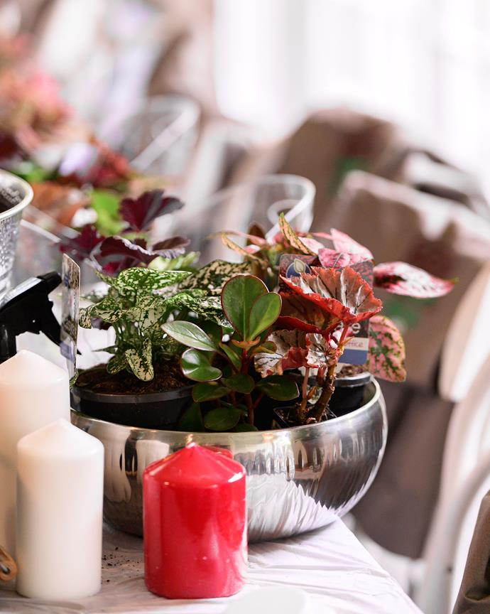 A variety of red and green plants will set a festive tone for your table.