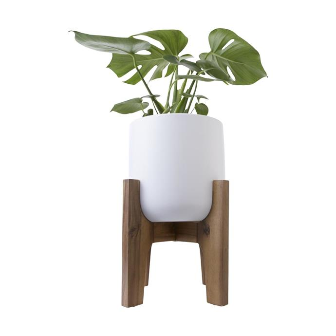 """Pot with Acacia Stand, $15, [Kmart](https://www.kmart.com.au/product/pot-with-acacia-stand/1881305