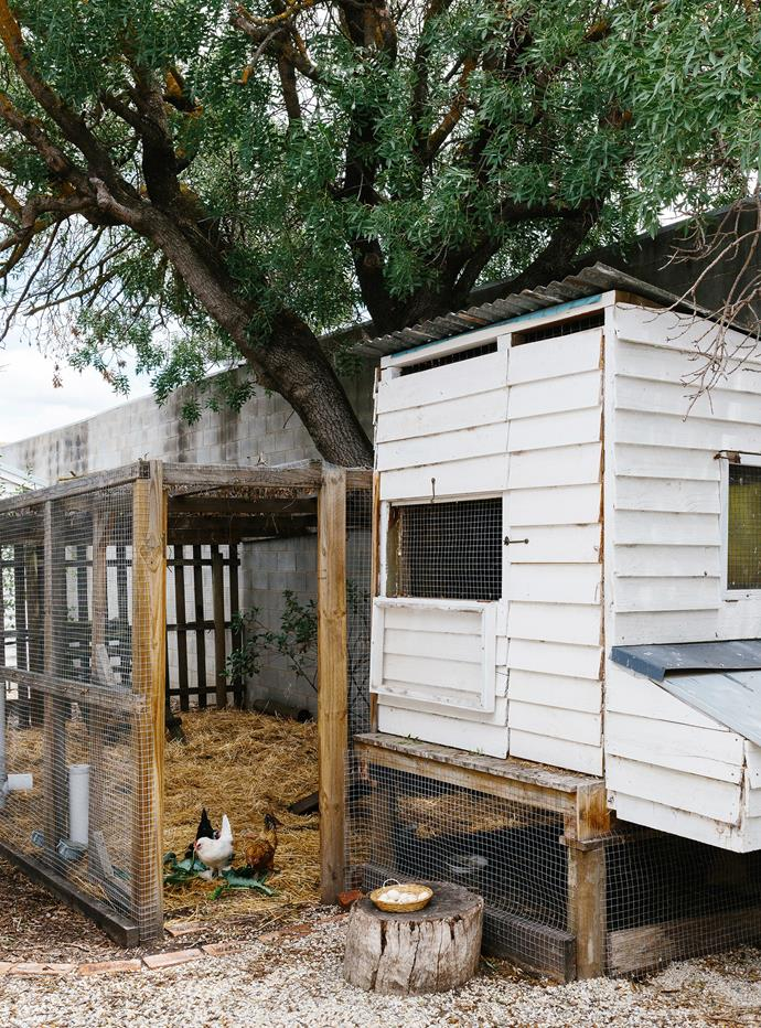 The chook run is a converted cubby house.