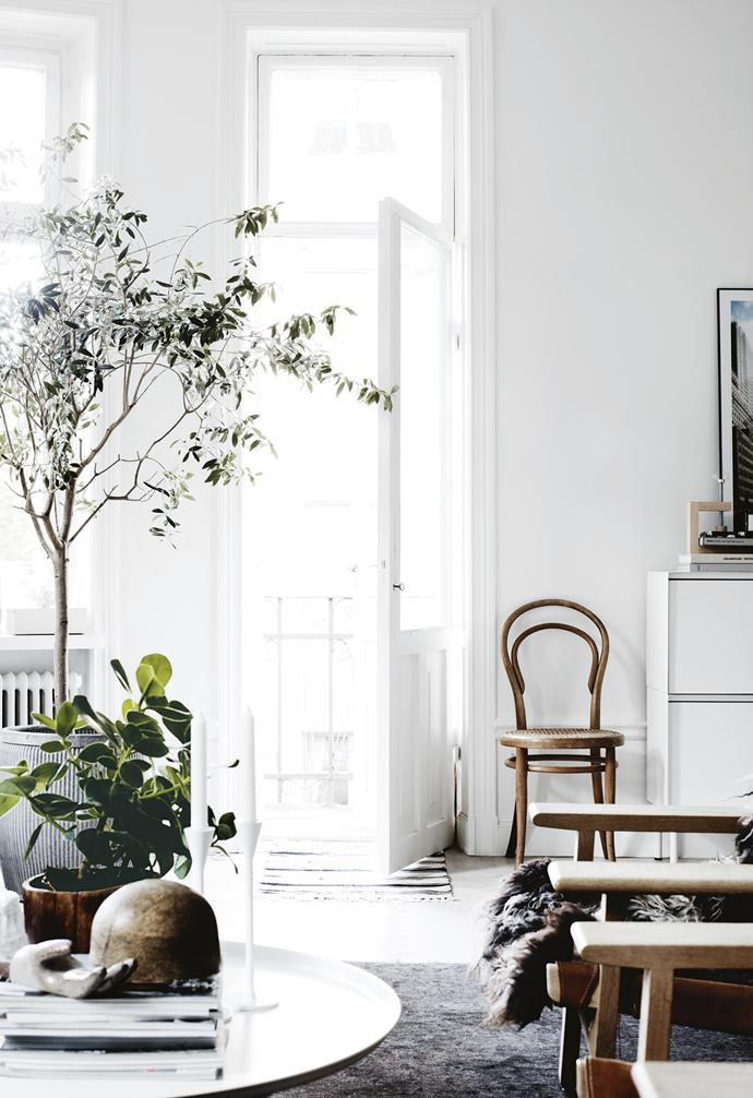 "The generous living and dining areas are divided by a wide opening, and both benefit from an abundance of [natural light](https://www.homestolove.com.au/how-to-increase-natural-light-in-home-15836|target=""_blank"") from traditional tall windows across the front of the apartment, with a calming view of lush treetops outside. Double doors lead from the dining room to the [all-white kitchen](https://www.homestolove.com.au/modern-kitchen-ideas-18756