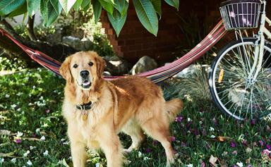 How to keep your pets cool during summer