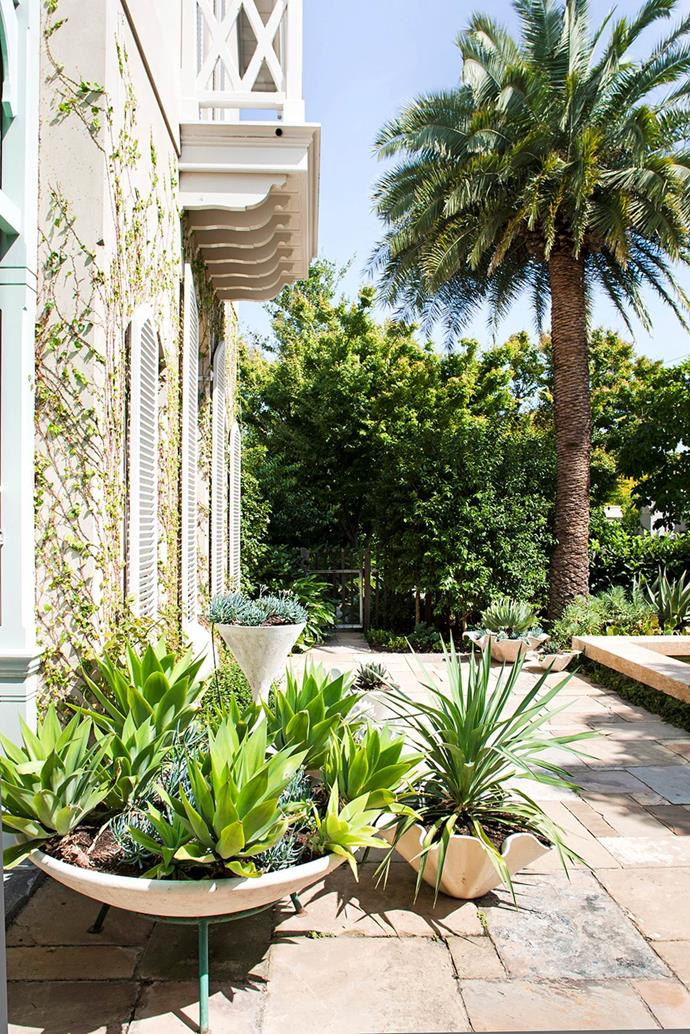 "The owners of this [Melbourne garden](https://www.homestolove.com.au/a-luxurious-melbourne-garden-with-a-sydney-look-1600|target=""_blank"") wanted to give it a non-Melbourne look. It features larger, more exotic foliage in defiance of the usual cooler-climate trends."