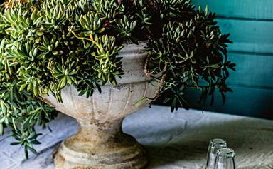 Everything you need to know about caring for succulents