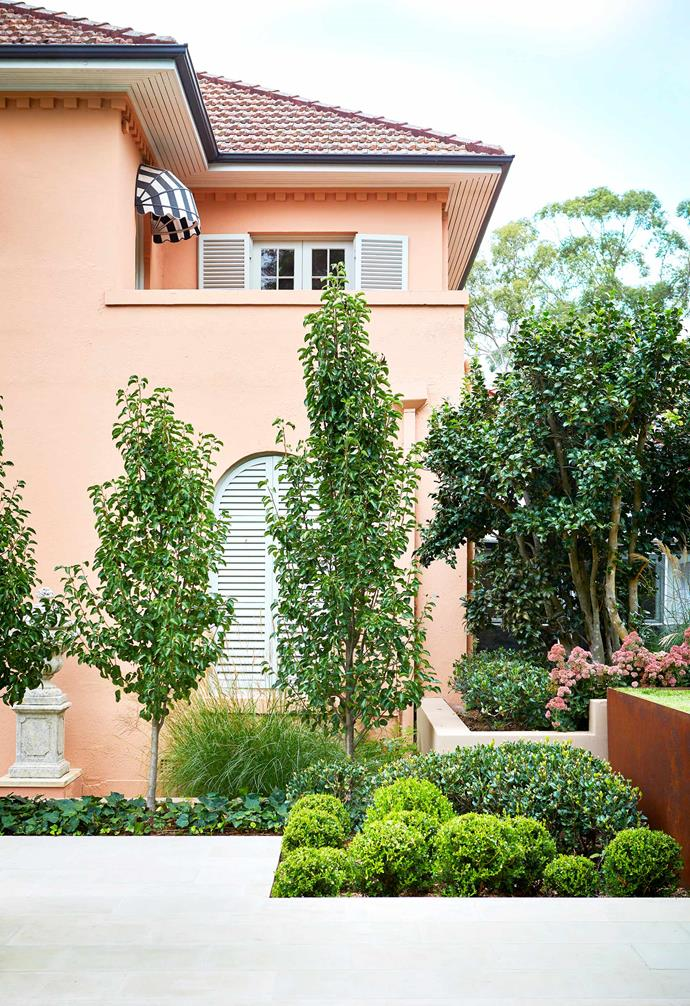 **Rear aspect** Pear trees provide height and seasonal colour. They're underplanted with Japanese box topiary that was shaped on site.