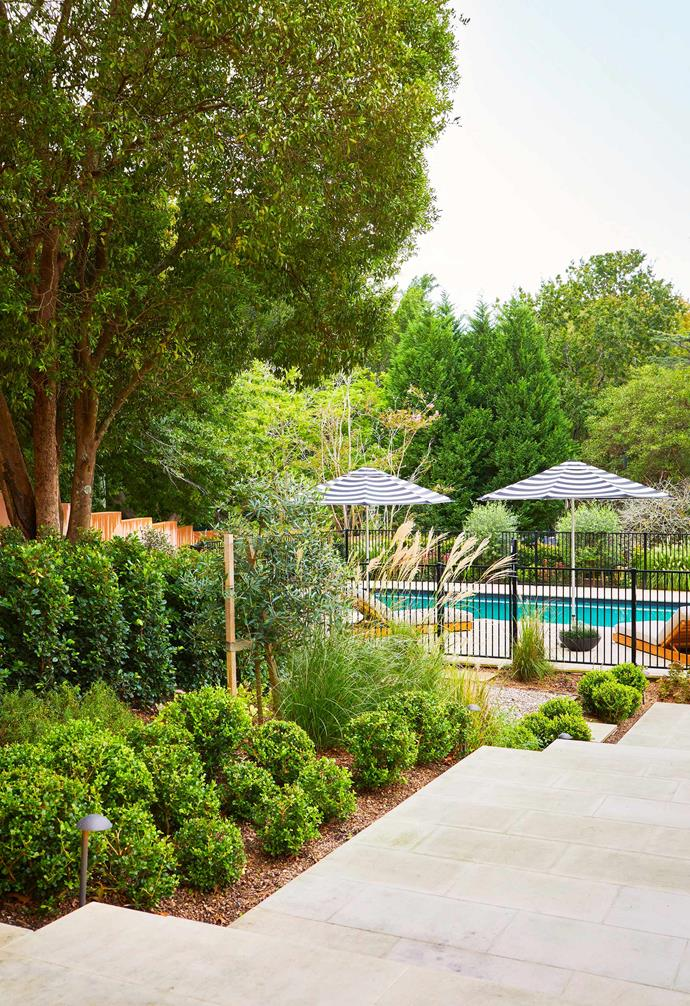 """**Pool area** Miscanthus grass and buxus line the path to the water. Burleigh day beds from [Eco Outdoor](https://www.ecooutdoor.com.au/