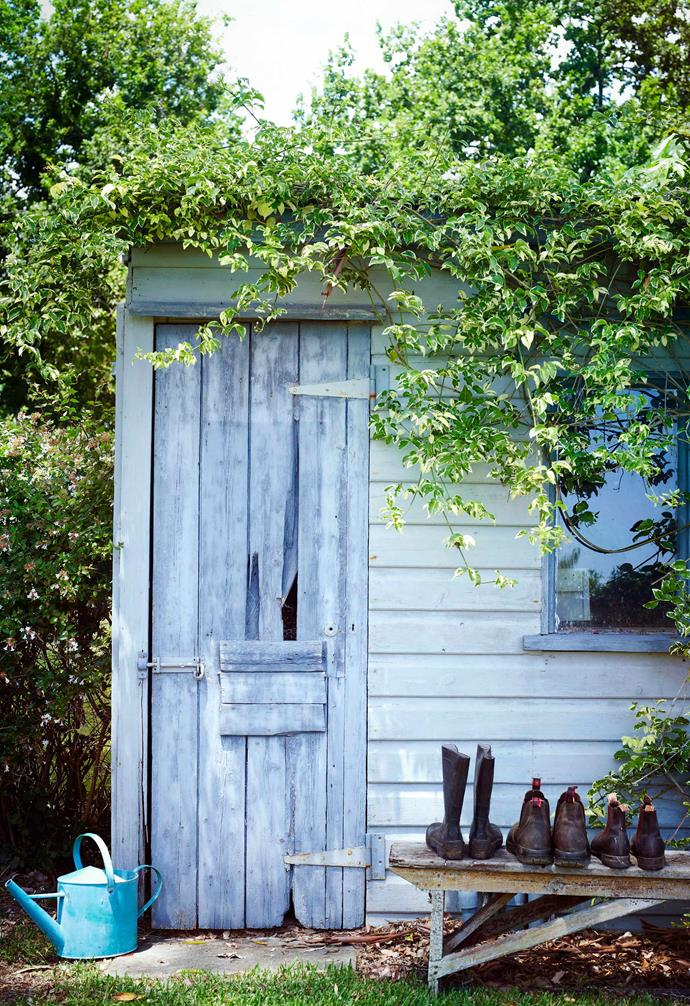 Make sure you factor in doors and windows in your overall garden shed design.