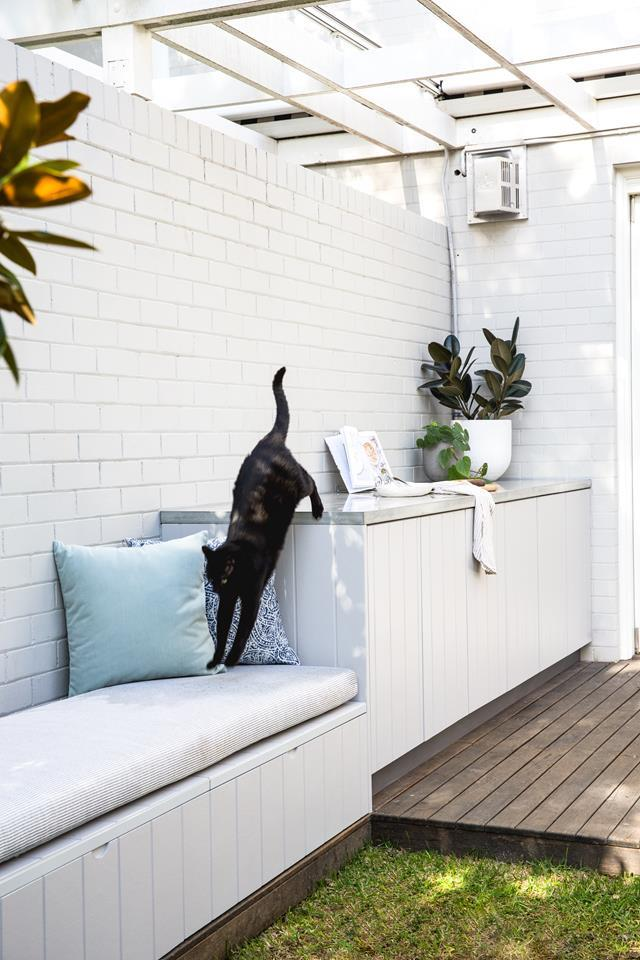 """Jetsam showing who owns the place on the deck of [his Northern Beaches home](https://www.homestolove.com.au/transforming-a-modern-australian-home-into-an-entertainers-dream-6992