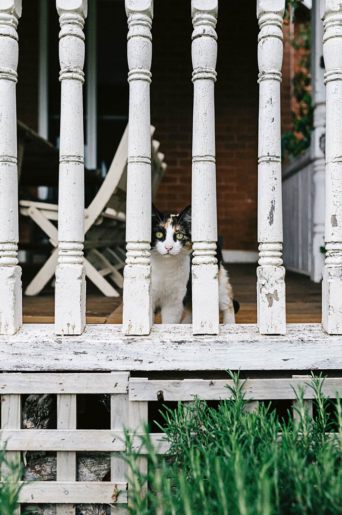 """Chalkie on neighbourhood watch duty outside his [eco-friendly Perth home](https://www.homestolove.com.au/small-eco-friendly-house-19983