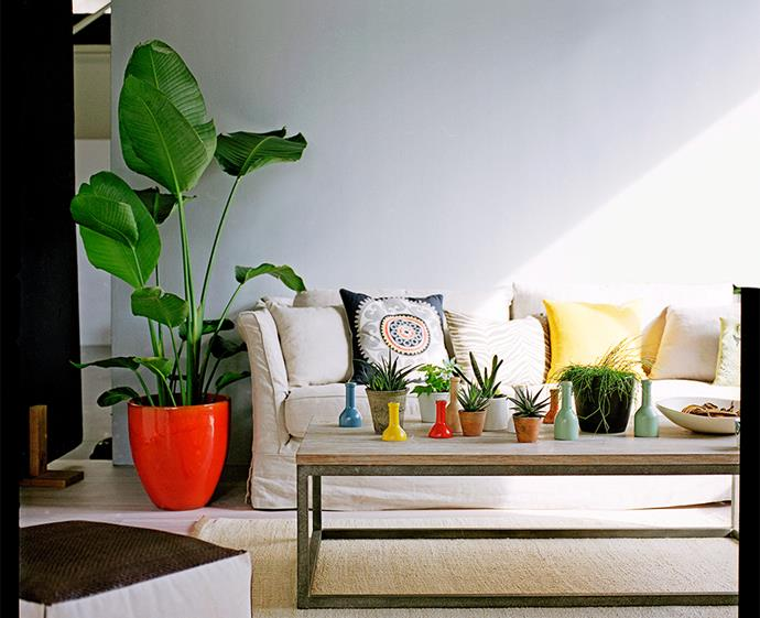 Breathe new life into your space with a burst of greenery. *Photo: Chris Warnes / bauersyndication.com.au*