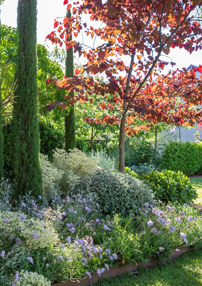 Pencil pines (Cupressus sempervirens 'Glauca') and forest pansy tree (Cercis canadensis 'Forest Pansy') are among 50 trees planted to add a sculptural element.