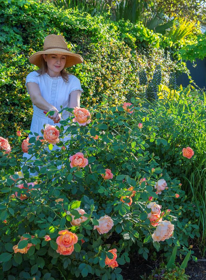 Heidi picks her favourite David Austin roses, 'Lady of Shalott'.