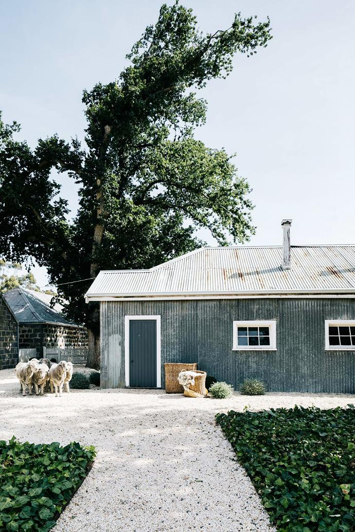 "Originally known as Long Water Hole, Barunah Plains was established in the 1840s and was at one point the largest sheep station in Victoria. The [bluestone farmhouse](https://www.homestolove.com.au/bluestone-farmhouse-20392|target=""_blank"") is now home to the Canny family, who have spent years restoring it to its former glory."