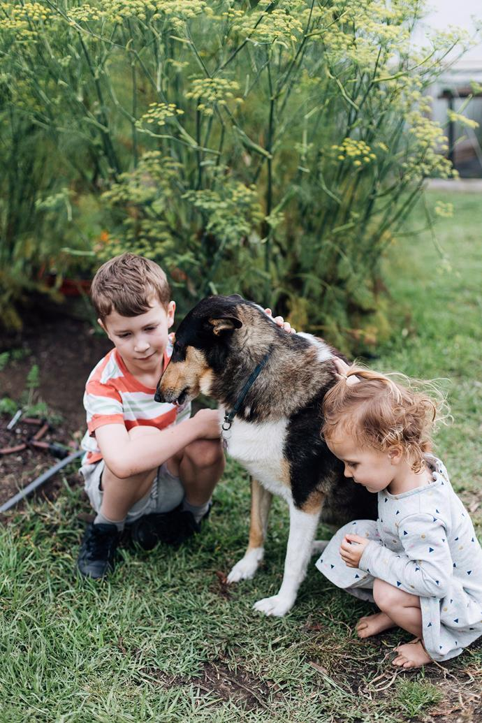 If you have kids, it's important to check with shelter staff about an animal's behaviour and experience with children.