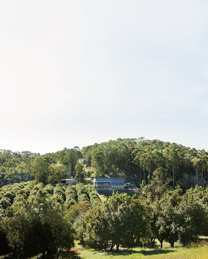 At Cape Byron Distillery, where Brookie's Gin is made, you can enjoy a gin and tonic on the deck overlooking the macadamia orchard and regenerated rainforest.
