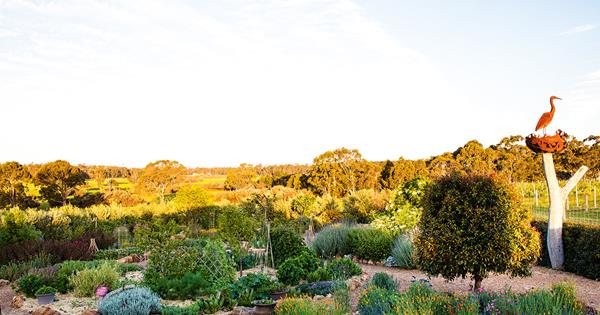A sensory garden at Whicher Ridge winery in Western Australia