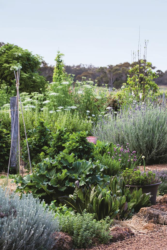 "A primary feature of the garden is its ""affinity beds"", comprised of herbs and hues to complement different wines. The riesling affinity bed is home to rhubarb, Thai mint, radicchio and a spicy oregano ground cover."