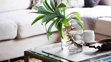 Growing plants in water: a low-maintenance indoor gardening solution