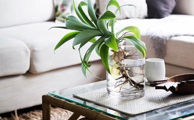 Growing plants in water: a low-maintenance indoor gardening solution