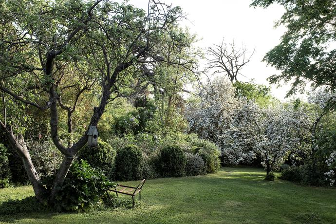 A secluded section of lawn.