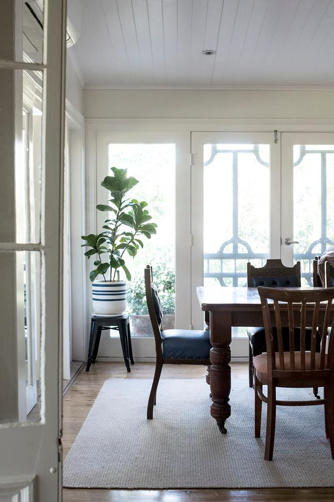Light streams into the formal dining room where an antique dining setting is often used by the Murray family. A fiddle-leaf fig sits in a ceramic planter from Katie's store, Stone's Throw.