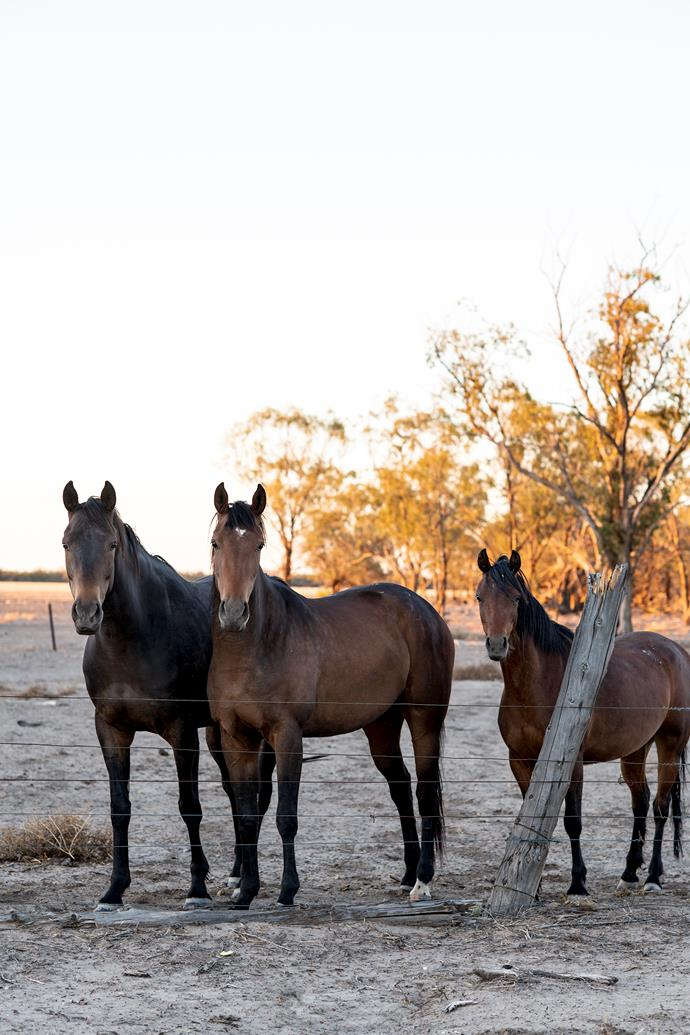 Curious horses in a neighbour's paddock up the road from Milrea.