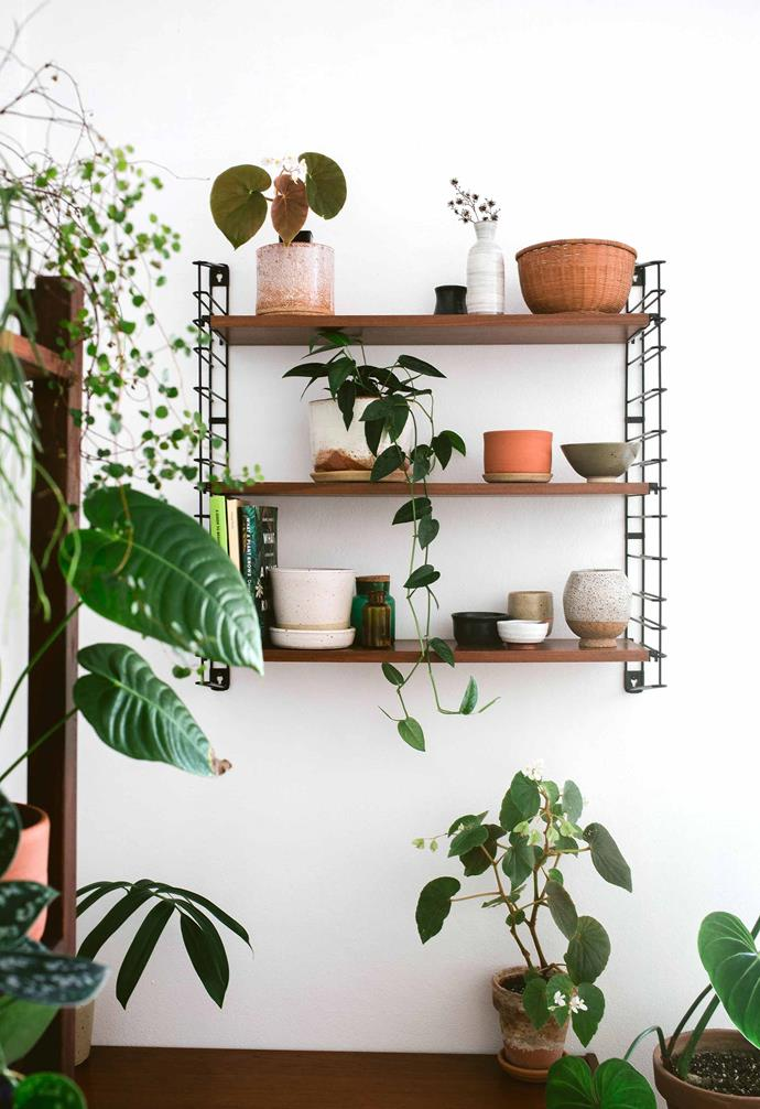 "Mix and match your [indoor plants](https://www.homestolove.com.au/low-maintenance-indoor-plants-2878|target=""_blank"") to create a relaxing indoor jungle in your home."
