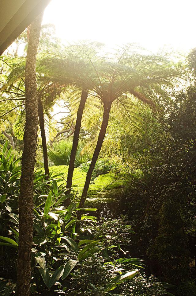 A large tree fern in a tropical garden. Photo: Sue Stubbs / bauersyndication.com.au