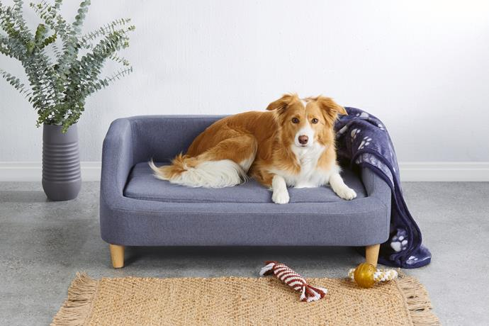 Large pet sofa, $99.99 with throw blanket, $9.99