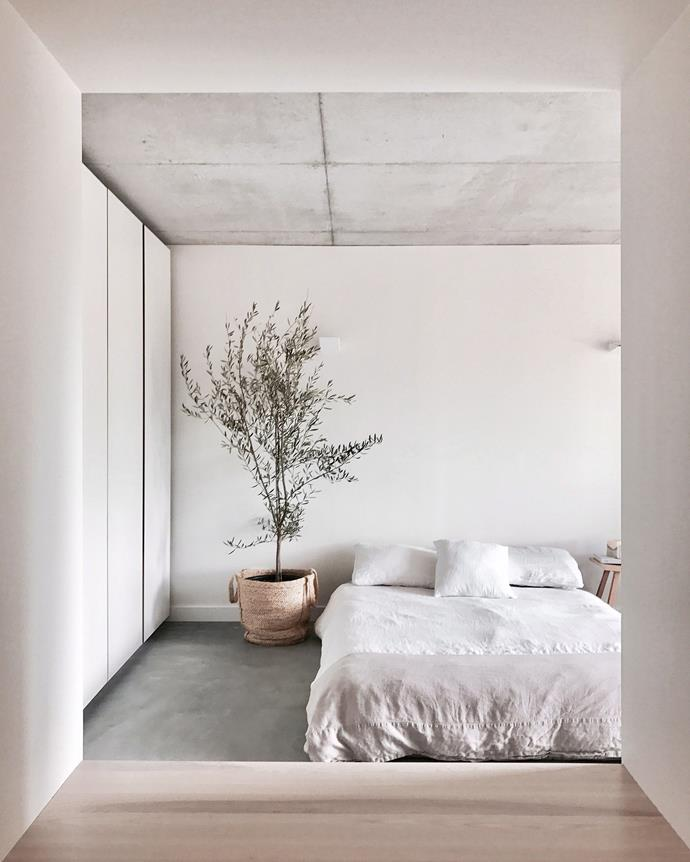 A olive tree, textured concrete surfaces and simple, natural decor, give this minimalist bedroom an Mediterranean feel.