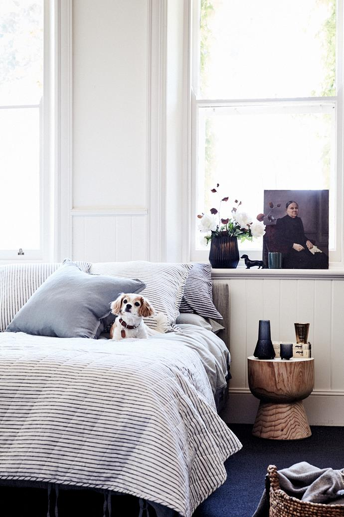 "Rosie, wearing Rupp dog collar, $69.95, from Country Road, relaxes in the homestead's guest bedroom. Vintage Stripe queen-size quilt cover in Ink, $299, and Maison Vintage queen-size quilt cover in Limestone, $229, both from [Aura Home](https://www.aurahome.com.au/|target=""_blank""