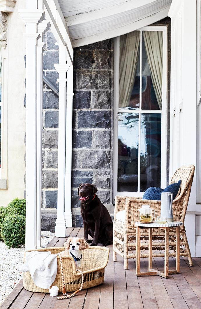"Rosie and Barry on the verandah. Baba Tree hand-woven fair trade dog basket, $299, and Georgie Paws dog lead, $84, both from [The Panton Store](https://shop.shelleypanton.com/|target=""_blank""