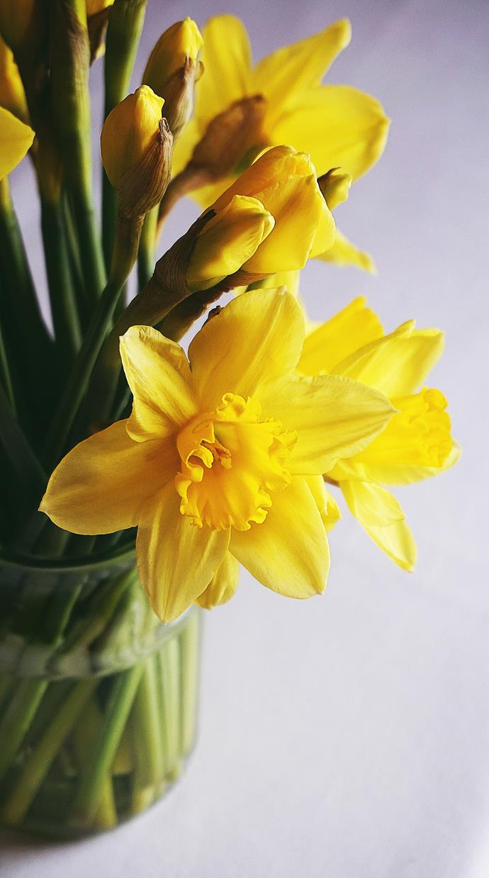 Sunny yellow daffodils herald the start of spring.