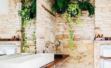 10 best indoor hanging plants
