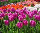 How-to guide: autumn bulb planting