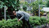 5 easy-to-grow vegetables