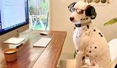 'Dogs Working From Home' is a must-follow on Instagram