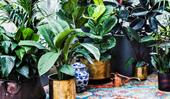Indoor garden buys for the urban gardener