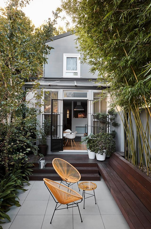 Bamboo is a popular plant for screening and privacy. *Photo: Jeremy Greive*