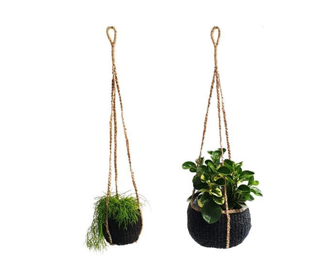 "Seagrass hangers, from $10, [Garden Life](https://gardenlife.com.au/product/seagrass-hanger/|target=""_blank""|rel=""nofollow"")"