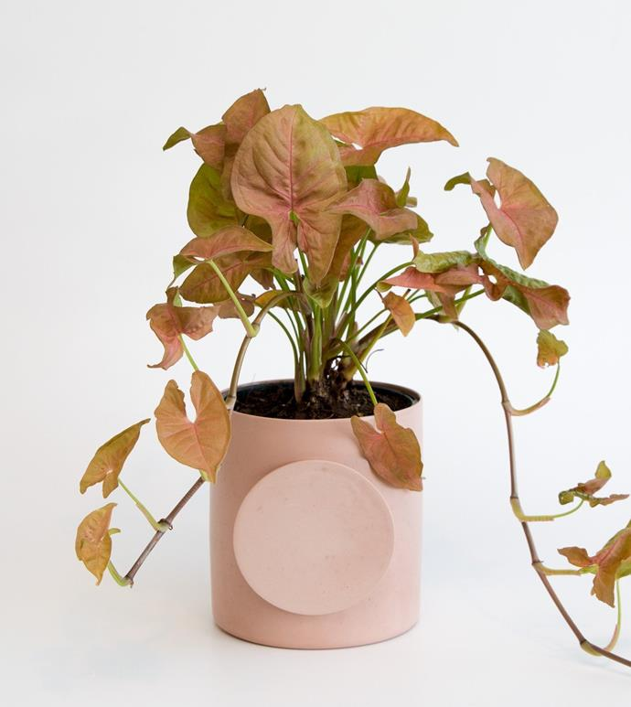 """Memphis planter, $99, [Gingerfinch](https://gingerfinch.com.au/collections/garden-outdoors/products/memphis-planter-salmon